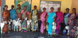 India Goat Project